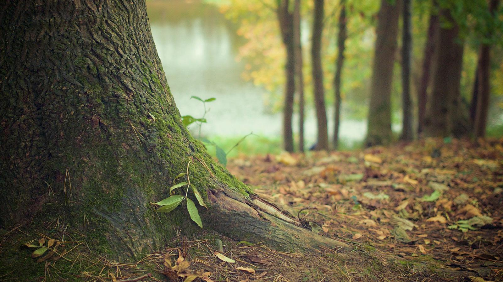 tree-trunk_1600x900